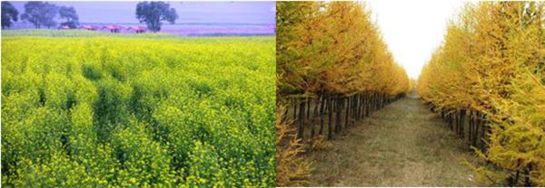 【新闻稿】丰田在河北丰宁举办18周年植树造林活动06301053.jpg
